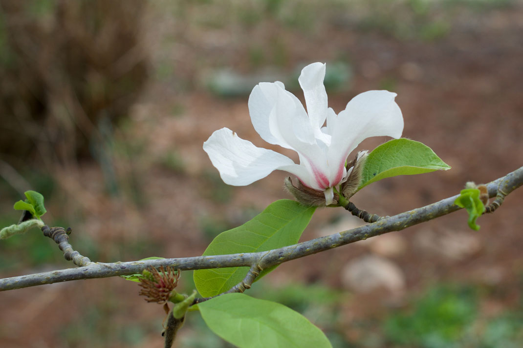 flower essence for releasing