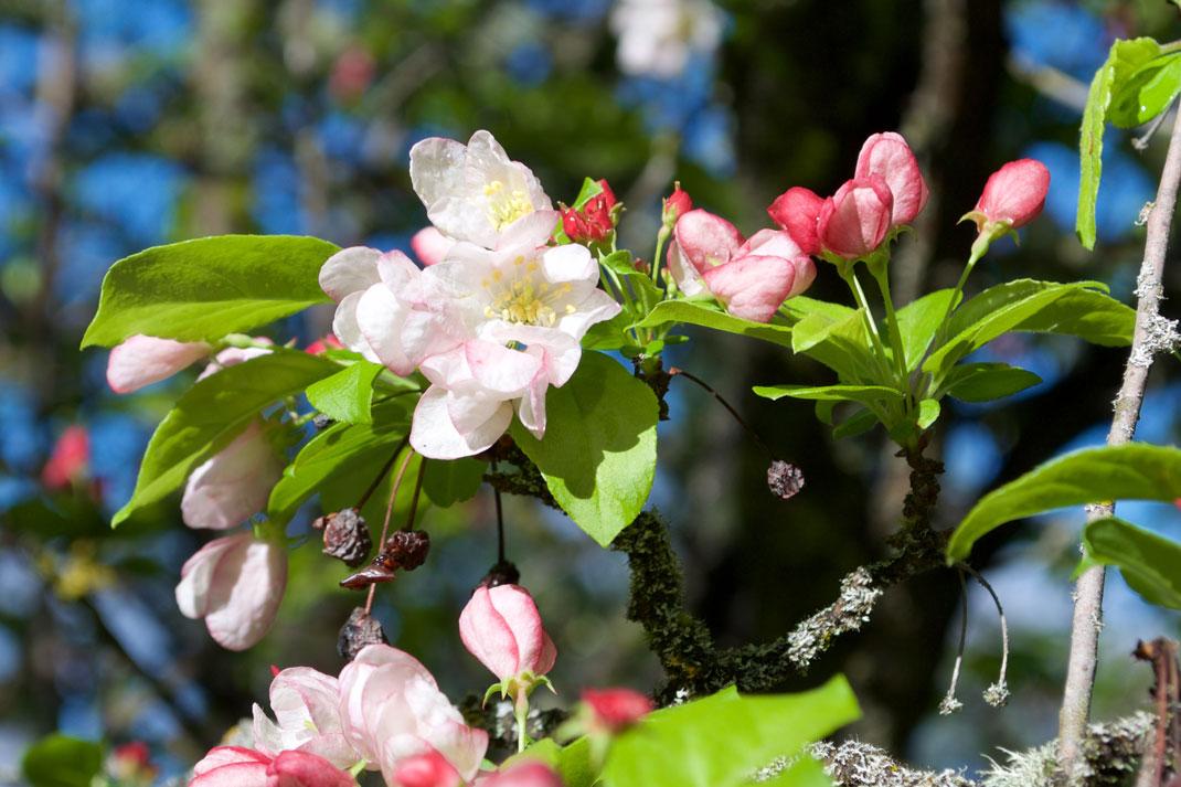 flower essence for releasing limiting beliefs