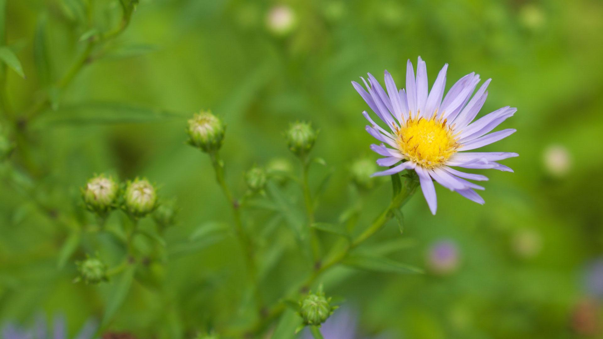 flower essence for loss