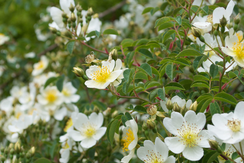 flower essence for grief